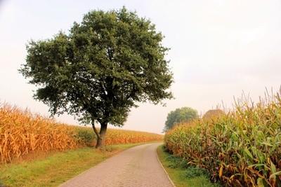 Schöne Natur zum Pedelec fahren_by_Helmut Hein_pixelio.de